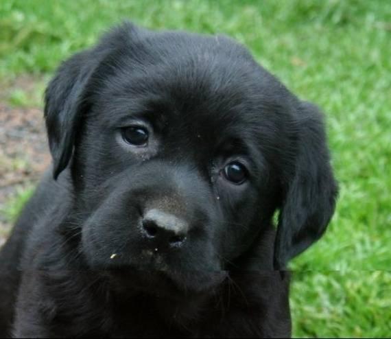 Artois Hound Dog: Artois Uppys Rule Breed