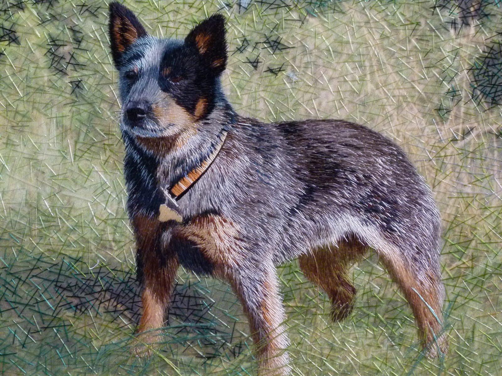Australian Cattle Dog: Australian Justfunnylife Breed