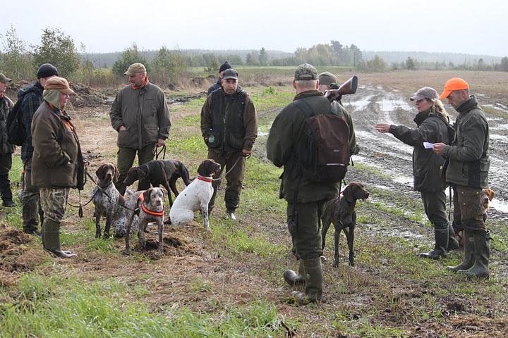 Braque du Bourbonnais Dog: Braque Junkkari September Breed