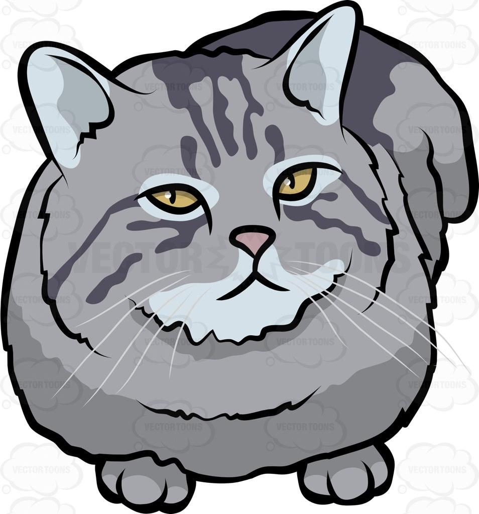 British Semi-longhair Cat: British A British Semi Longhair Pet Cat Breed