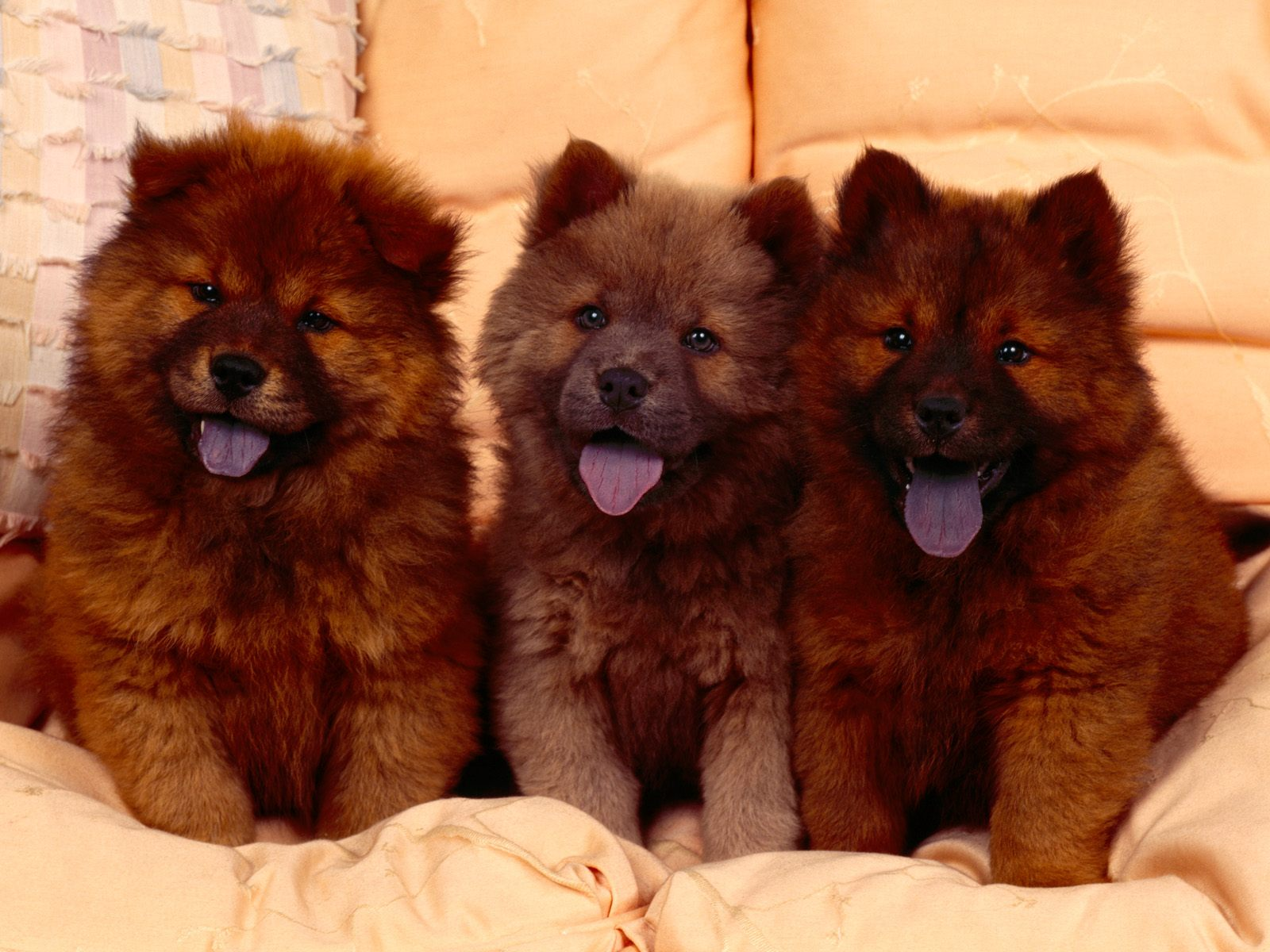 Caucasian Shepherd Puppies: Caucasian Kavkazskaya Ovcharka Breed