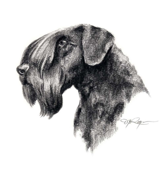 Cesky Terrier Dog: Cesky Cesky Terrier Dog Art Print Signed By Breed