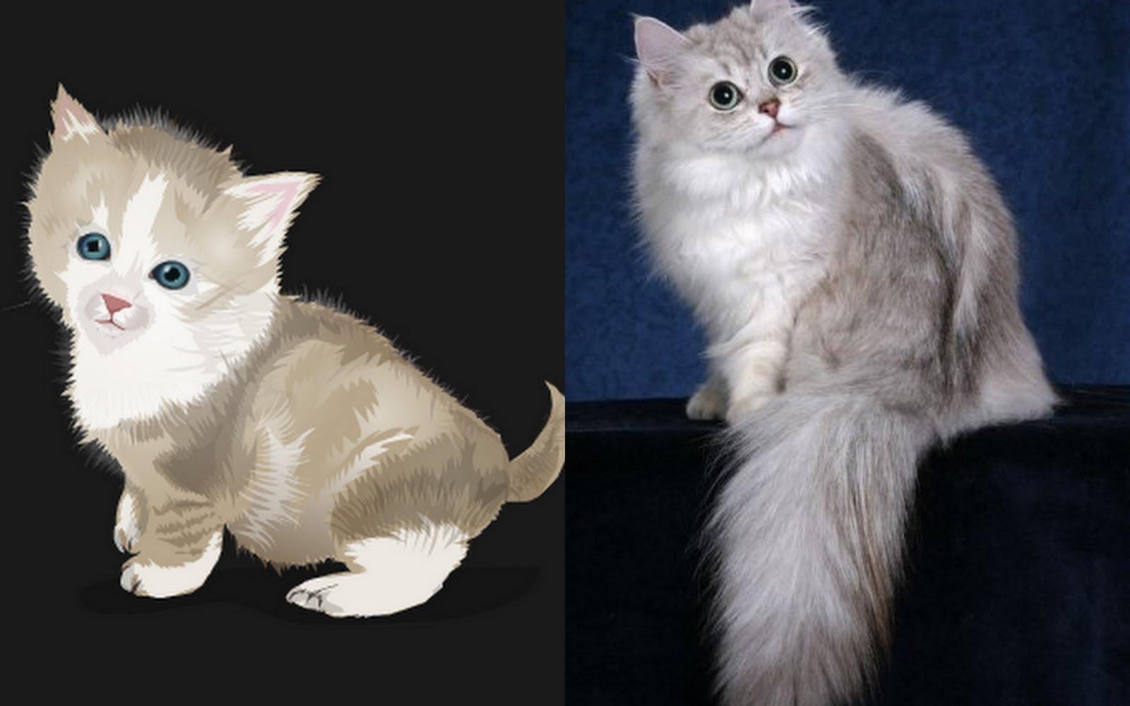 Chantilly-tiffany Cat: Chantilly Tiffany Pet Porter Breed