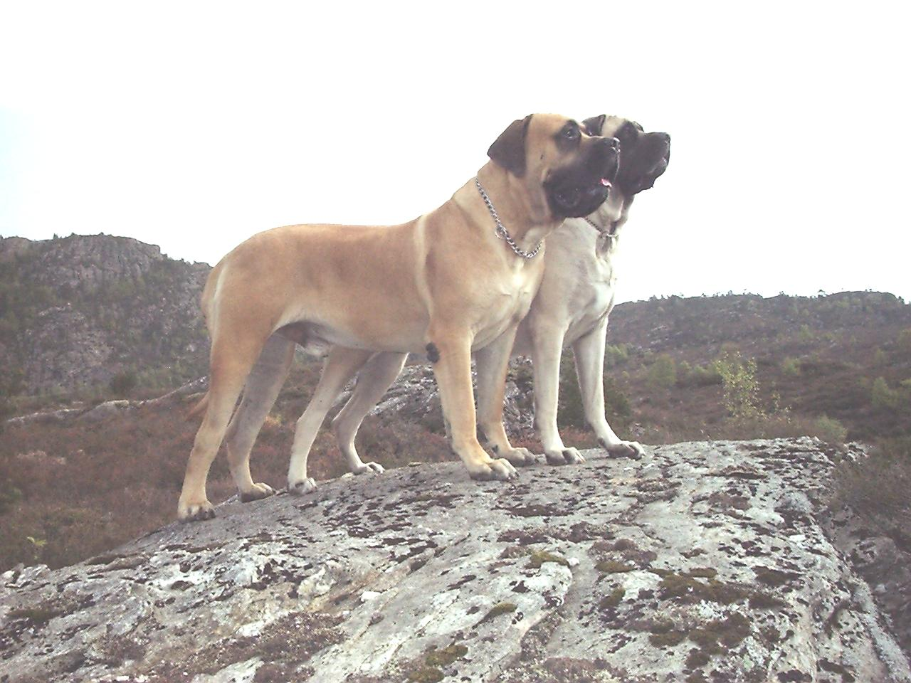 Recommended Dog Breeders Uk