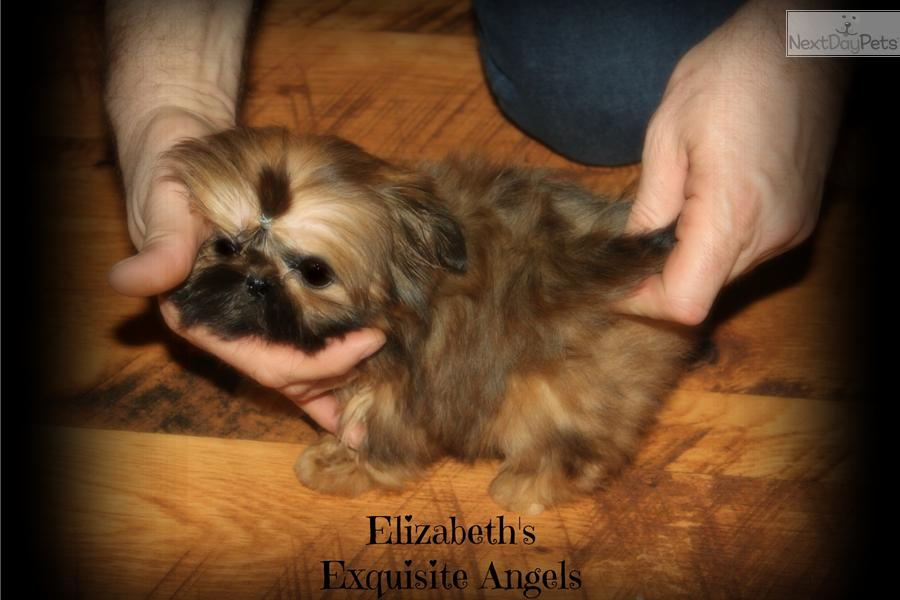 Chinese Imperial Puppies: Chinese Fdaa Breed