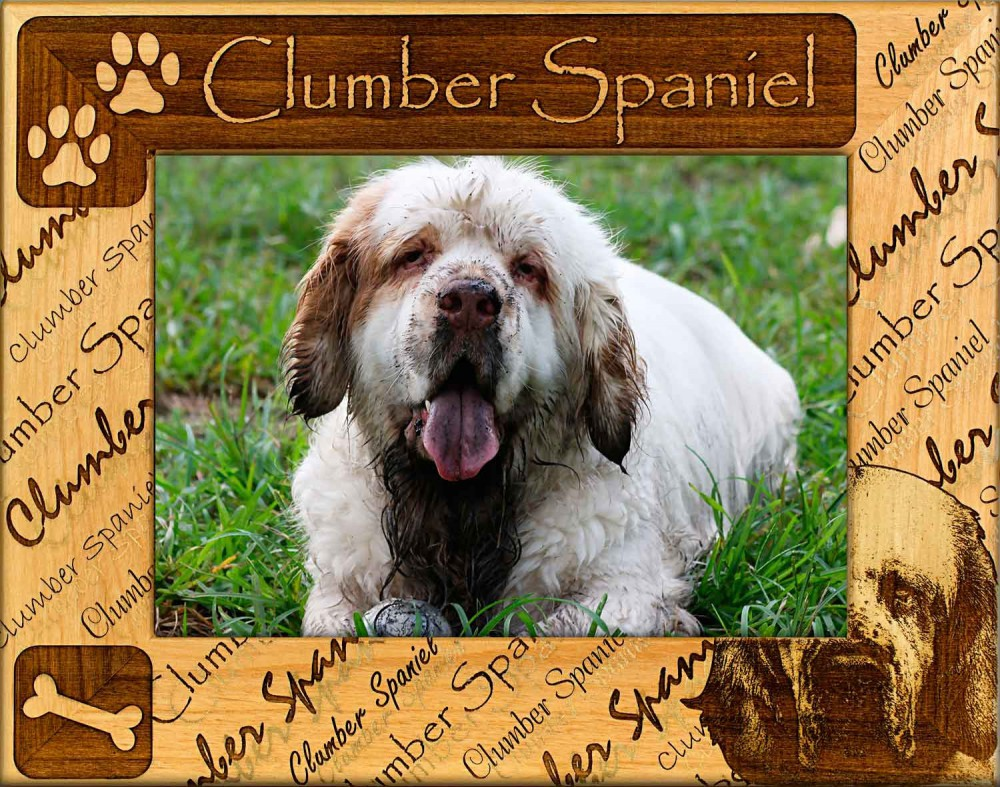 Clumber Spaniel Dog: Clumber Clumber Spaniel Dog Breed Picture Frame