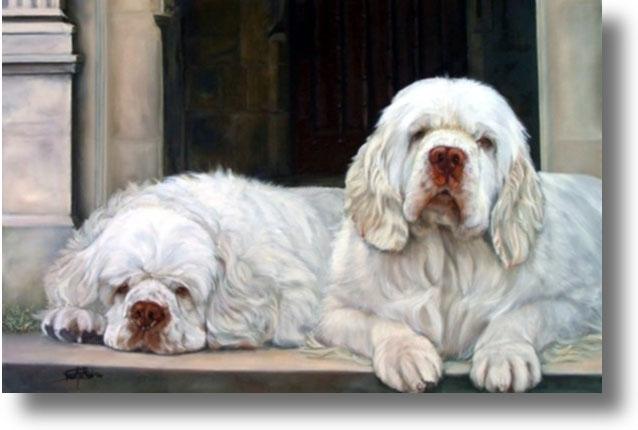 Clumber Spaniel Dog: Clumber Clumber Spaniel Dogs Breed