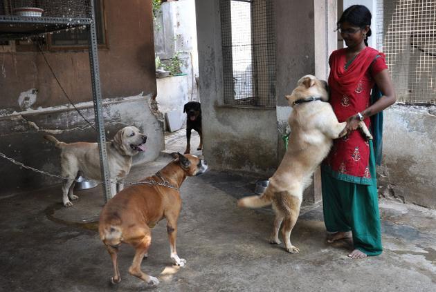 Combai Dog: Combai Sippiparai Dog Breed