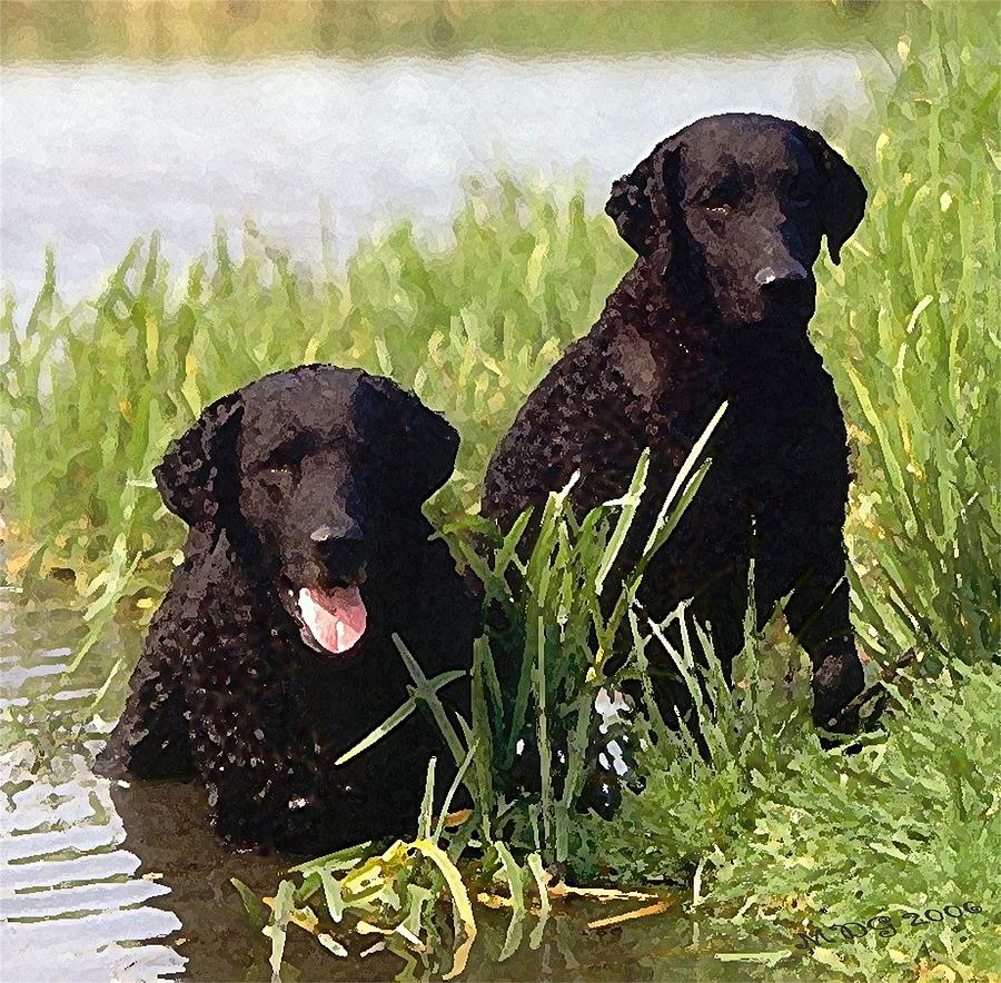 Curly Coated Retriever Dog: Curly Curly Coated Retriever Dog Olde Time Mercantile Breed