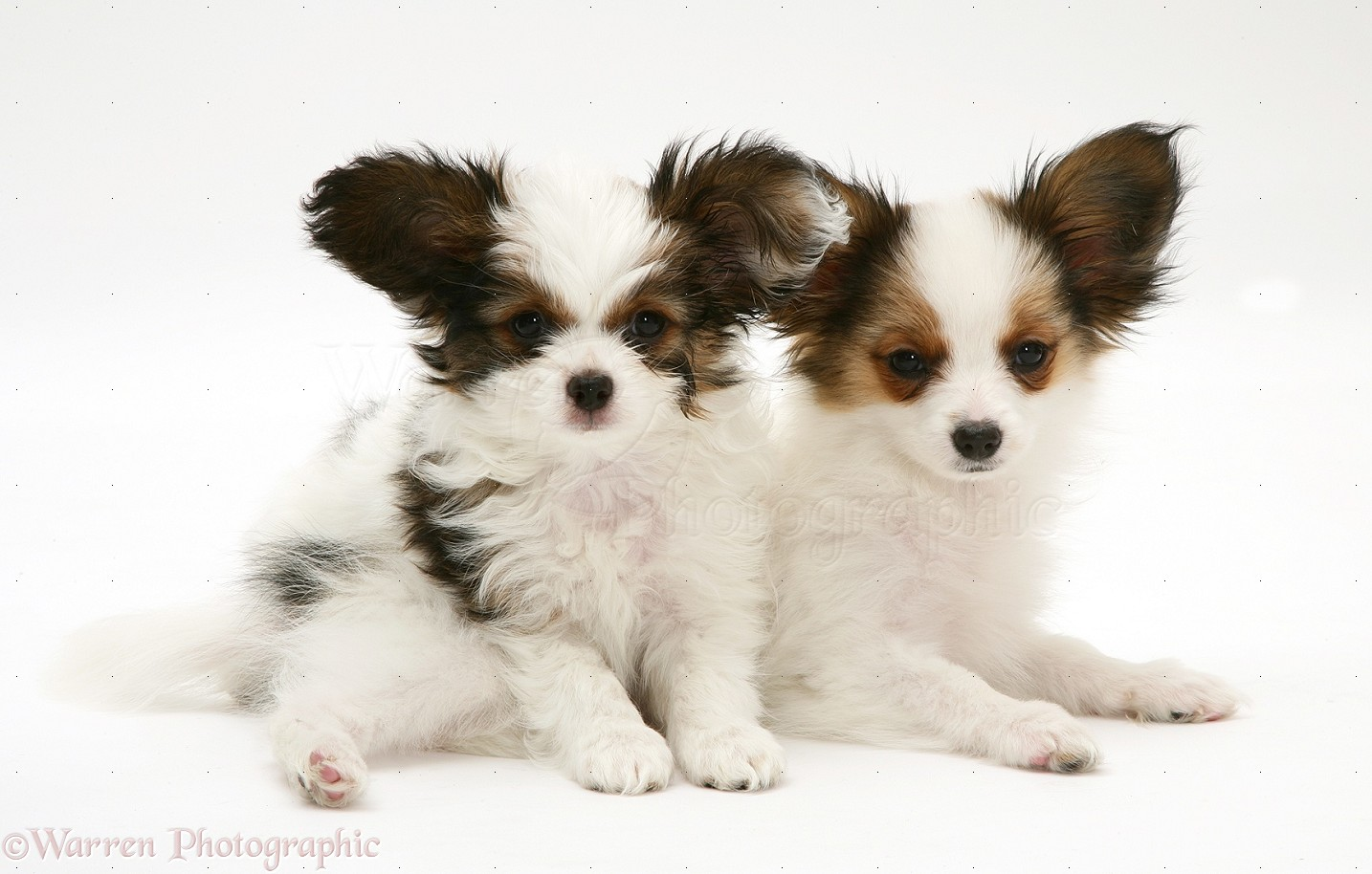 Cute Armant Puppies: Cute Lifeonbellair Breed