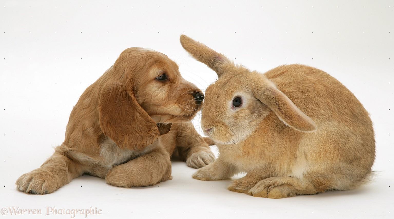 Cute Alpine Spaniel Puppies: Cute Related Pictures Puppies Hangin Teh Cute Cute Puppies Cute Kittens Breed