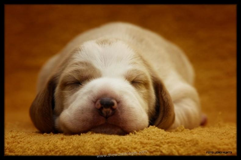 Cute Aidi Puppies: Cute Related To World Smallest Dog Collection Cute Dogs And Puppies Breed