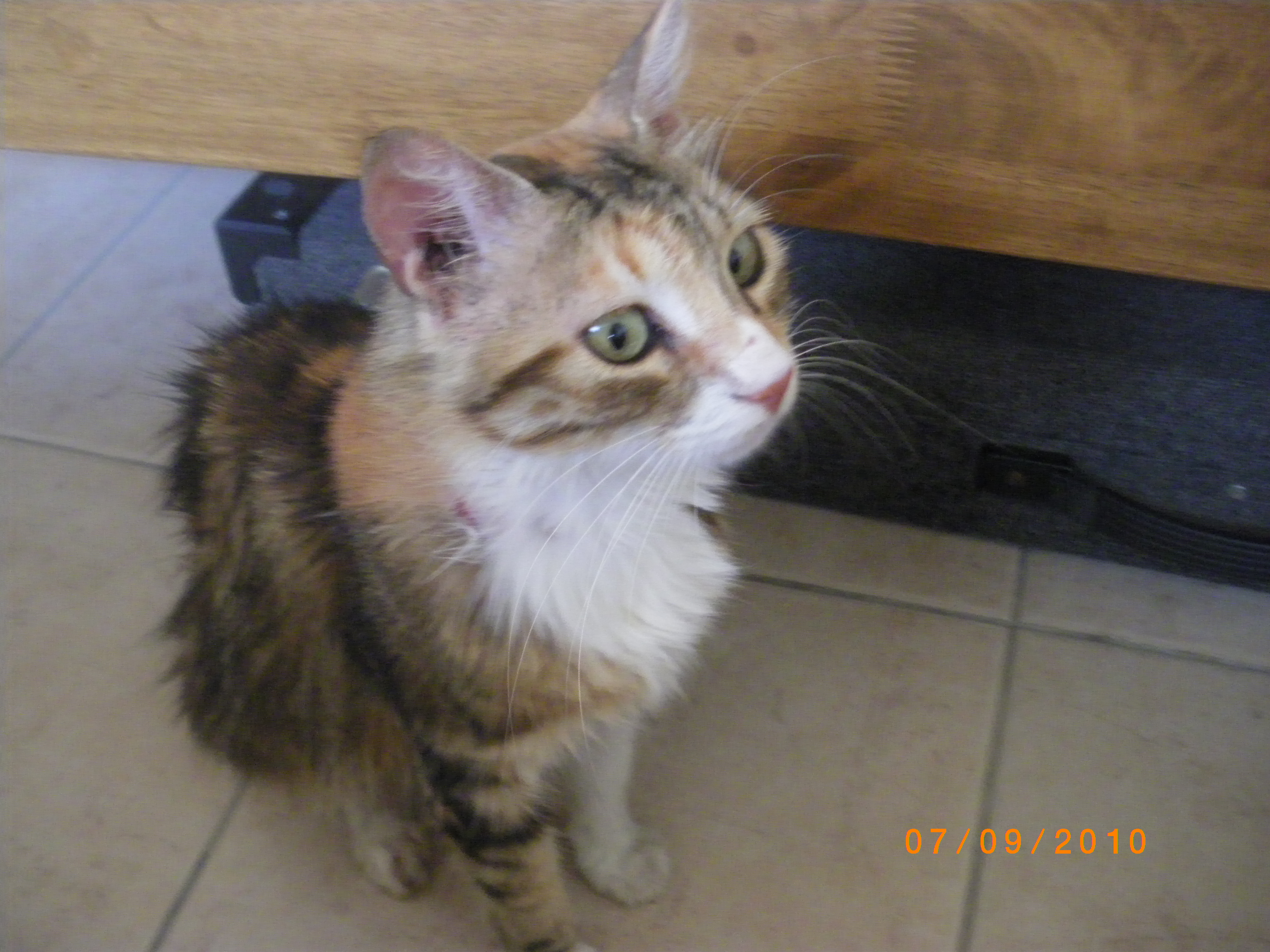 Cyprus Kitten: Cyprus Admin Breed