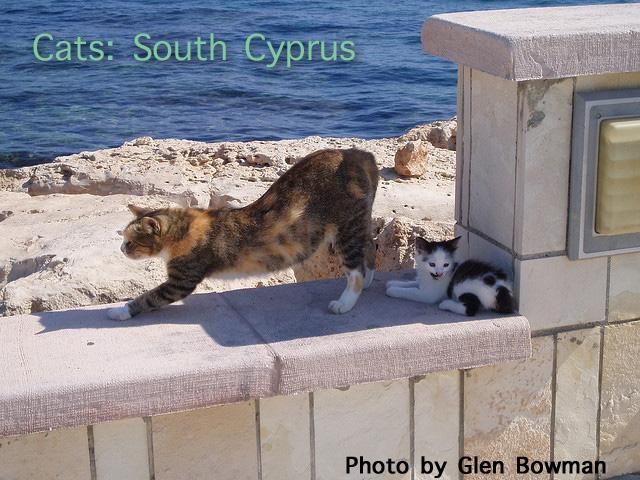 Cyprus Kitten: Cyprus Kitten Killed While People Eat At Cyprus Restaurant Breed