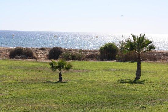 Cyprus Kitten: Cyprus Locationdirectlink G D I Anmariahotel Ayianapafamagustadistrict Breed