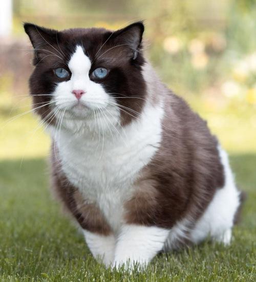 Cyprus Kitten: Cyprus News Breed