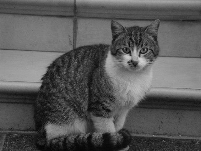 Cyprus Cat: Cyprus Pool Flickrbronzeaward Breed