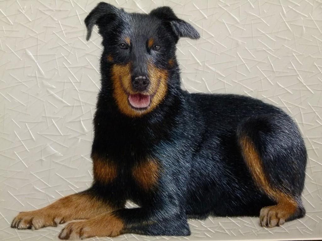 Doberman Pinscher Puppies: Doberman Doberman Pinscher Puppy Breed