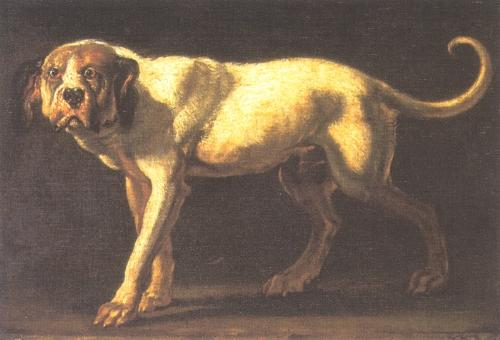 Dogo Cubano Dog: Dogo Dogo Cubano Dog Drawing Pic Breed