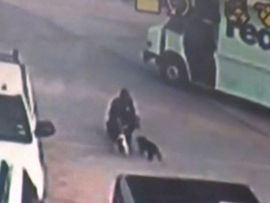 Drever Puppies: Drever Fedex Driver Steals Puppies Video Driver Caught On Camera Taking Puppies Breed