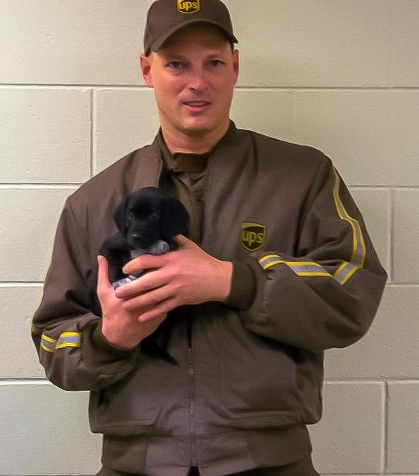 Drever Puppies: Drever Ups Driver Rescues Puppies From Side Of The Road Breed