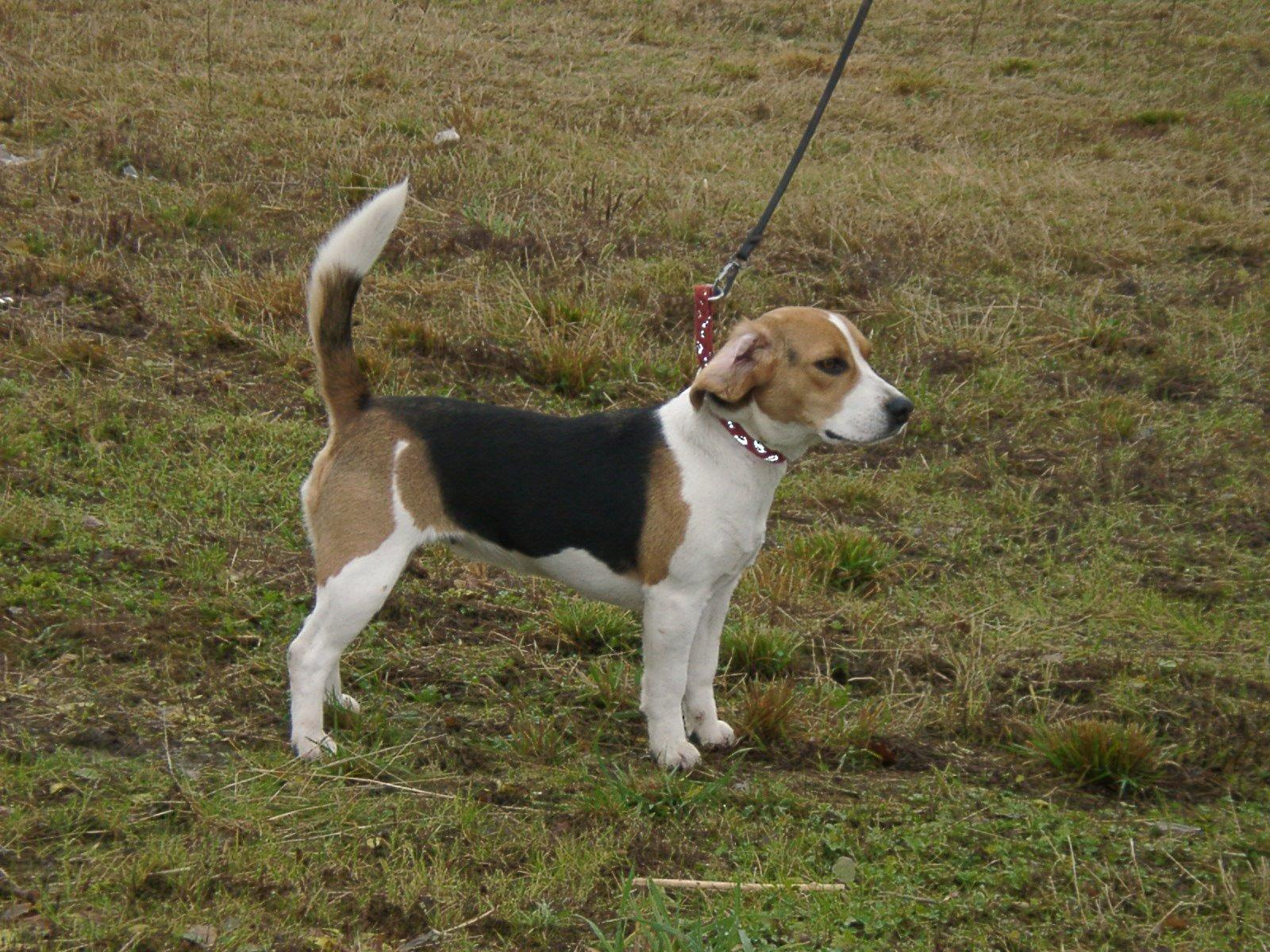 Dunker Dog: Dunker Gallery Breed