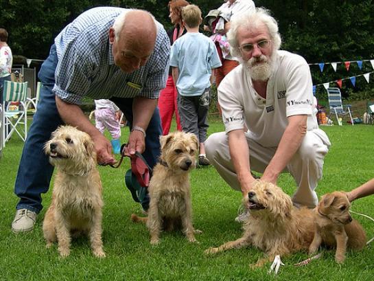 Dutch Smoushond Dog: Dutch Dutch Smoushond Dog Breed