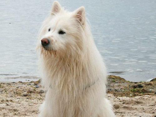 Elo Dog: Elo Elo Dog On The Beach Breed