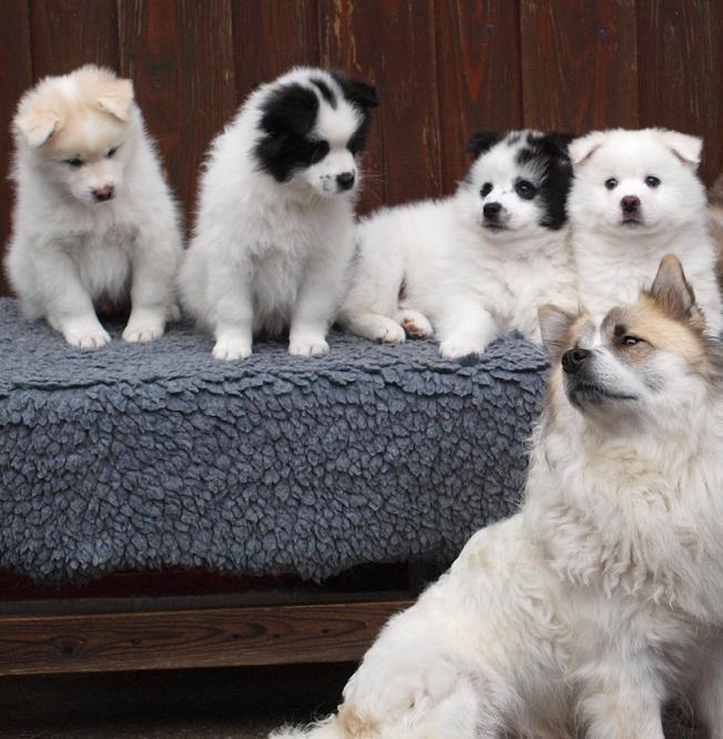 Elo Puppies: Elo Meeste Elo Puppies Inmiddels Bij Hun Nieuwe Baasjes Breed