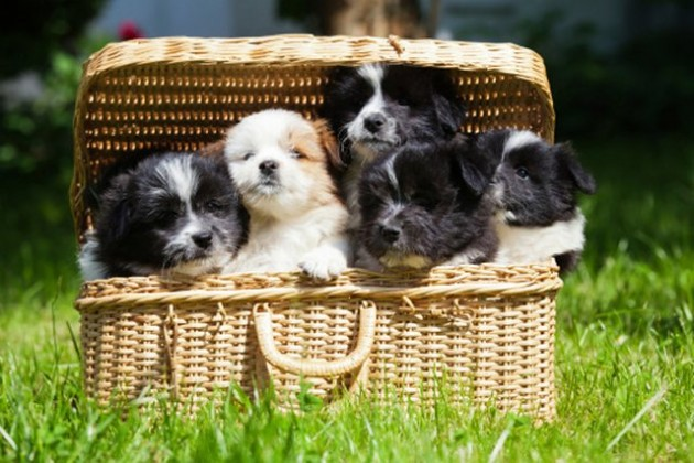 Elo Puppies: Elo Puppy Pictures Will Melt Heart Breed