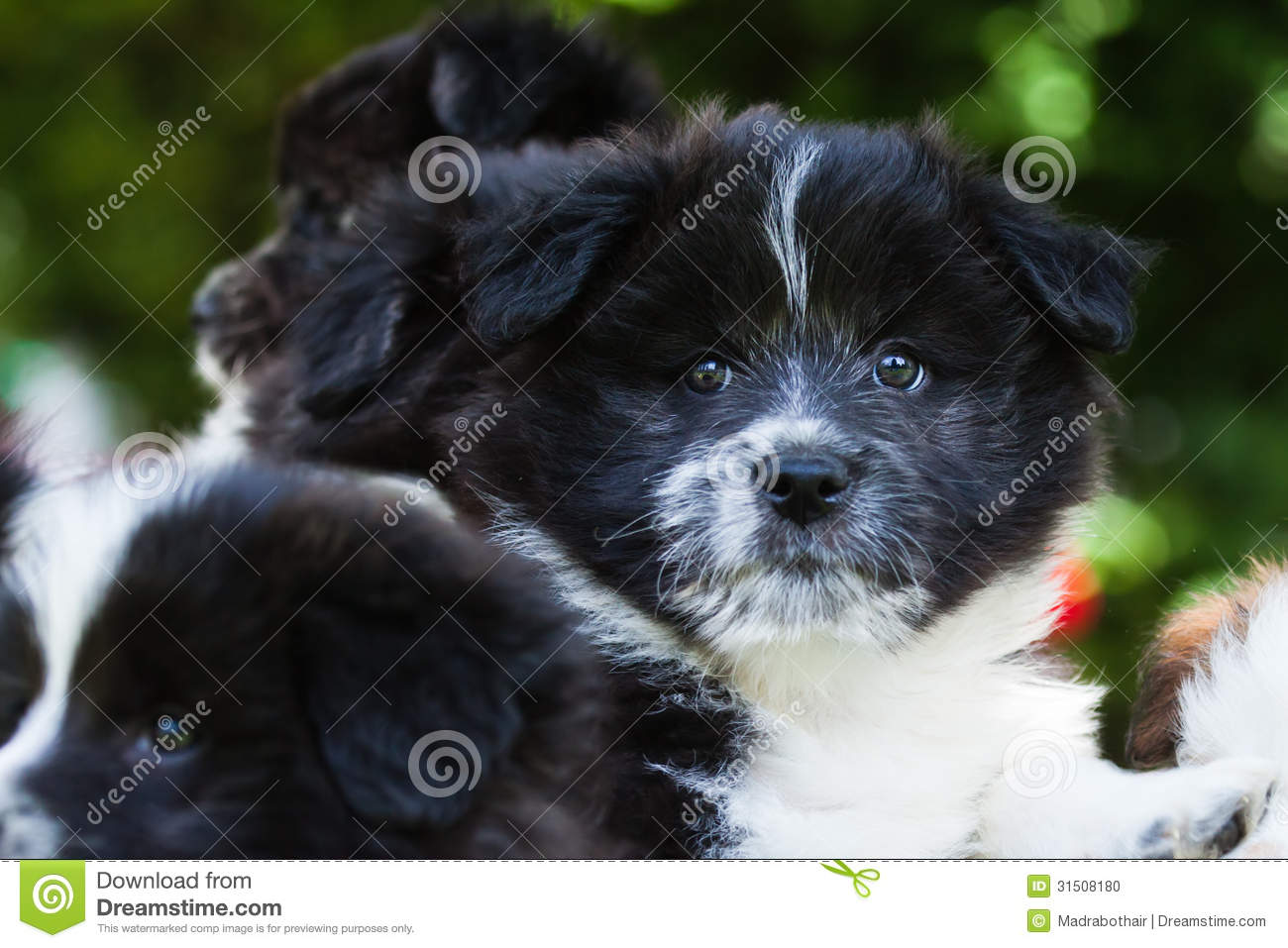 Elo Puppies: Elo Stock Cute Puppies Elo German Dog Breed