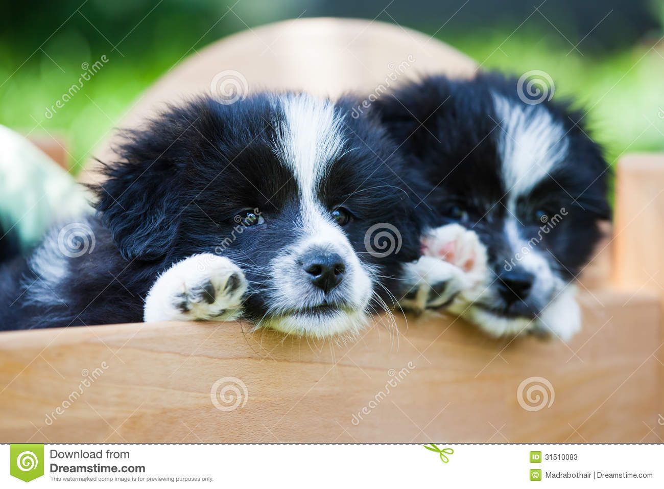 Elo Puppies: Elo Stock S Two Puppies Small Bed Elo German Dog Breed Lying