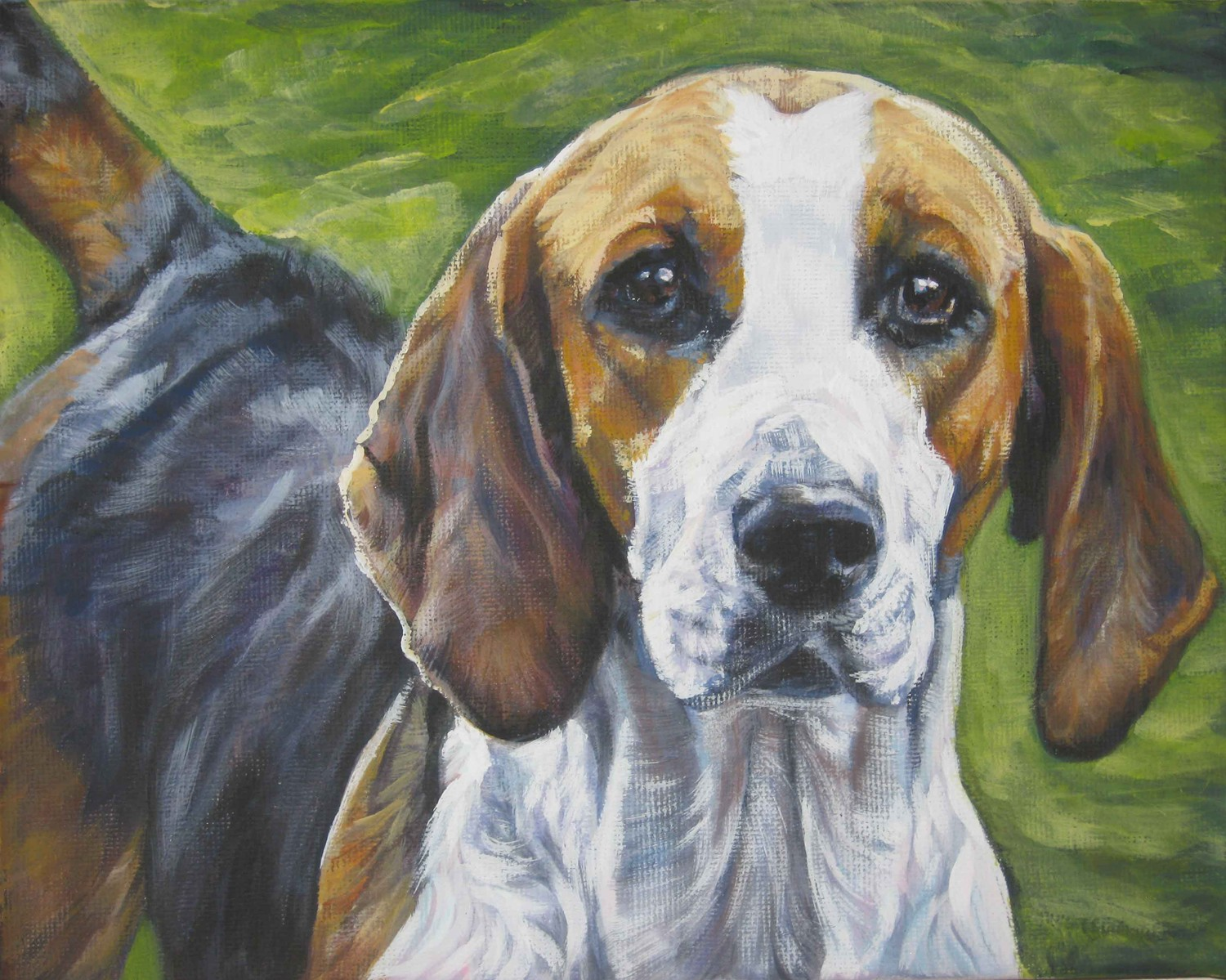 English Foxhound Dog: English English Foxhound Dog Pic Breed