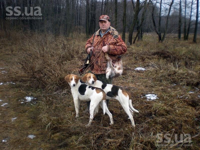 Estonian Hound Dog: Estonian Bkxld Breed