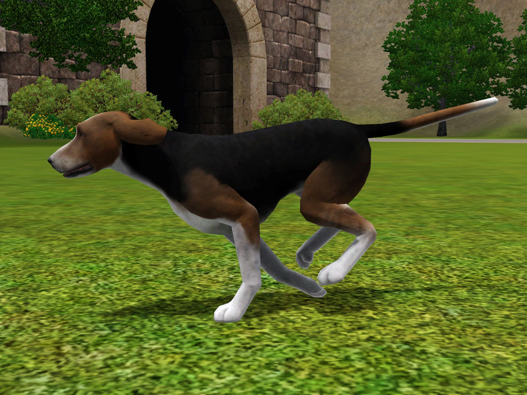 Finnish Hound Dog: Finnish Jumping Finnish Hound Dog Picture Breed