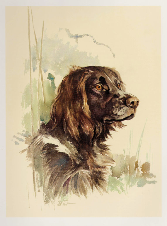 German Spaniel Dog: German German Spaniel Dog Print Vintage Breed