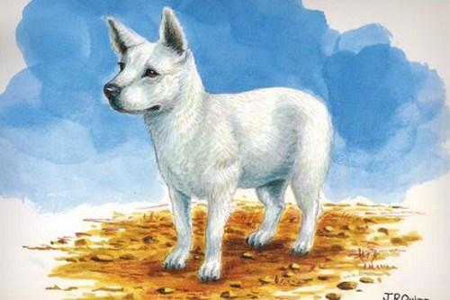 Hawaiian Poi Dog: Hawaiian Cordoba Fighting Dog Breed