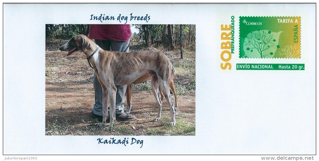 Kaikadi Dog: Kaikadi Idvarspain Indian Dog Breeds Kaikadi Dog Hunde Cani Chiens Dogs Perroslanguagee