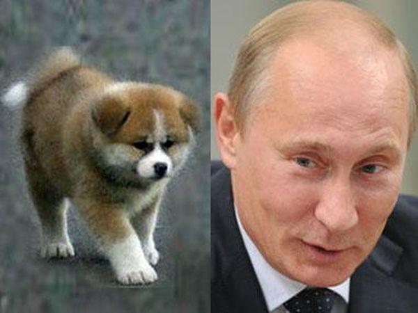 Karakachan Dog: Karakachan Karakachan Dog Putin Breed