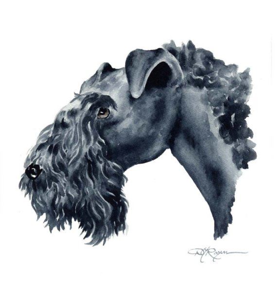 Kerry Blue Terrier Dog: Kerry Kerry Blue Terrier Dog Art Print Signed Breed