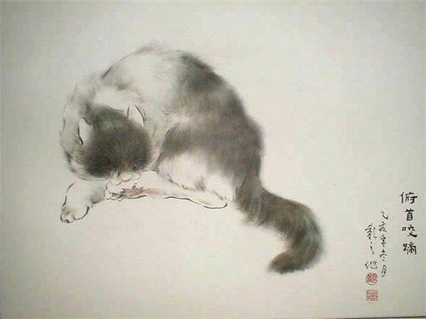 Korean Bobtail Cat: Korean Asian Art Cats Breed