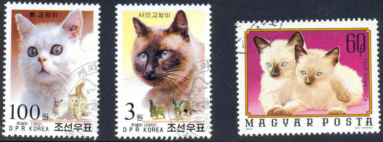 Korean Bobtail Kitten: Korean Topic Breed