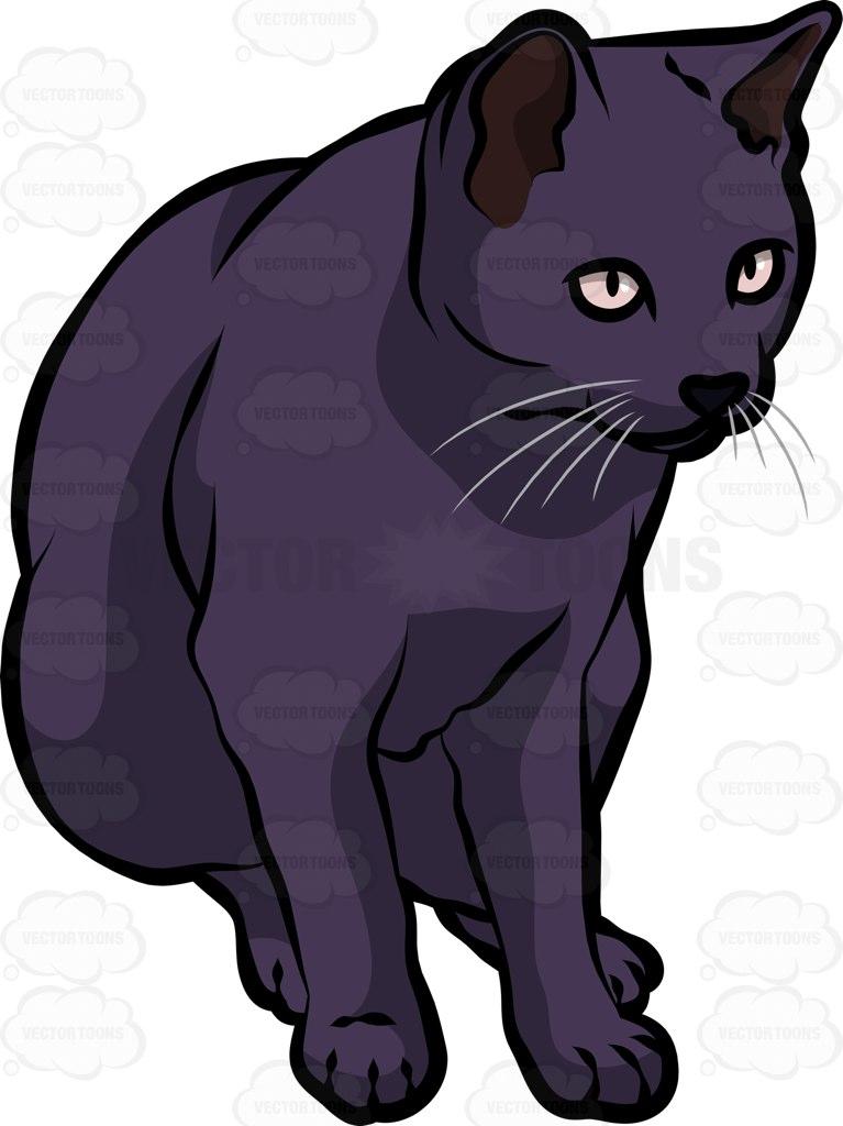 Korn Ja Cat: Korn A Korn Ja Cat Breed