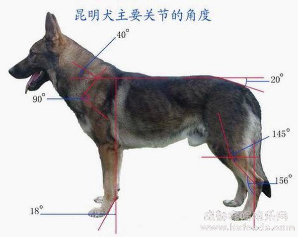 Kunming Wolfdog Puppies: Kunming Kunming Wolf Dog Breed