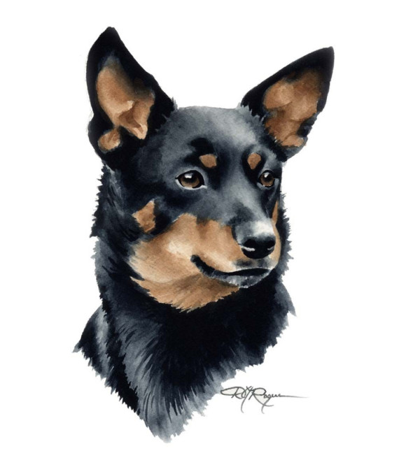 Lancashire Heeler Dog: Lancashire Lancashire Heeler Dog Watercolor Breed