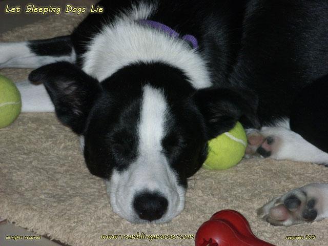 McNab Dog: McNab Archive Breed