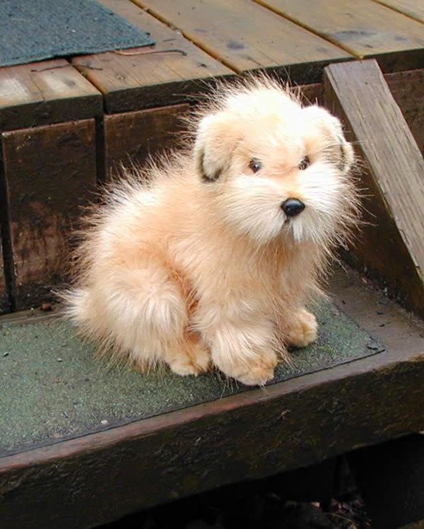 Norfolk Terrier Dog: Norfolk Stuffed Norfolk Terrier Dog Breed