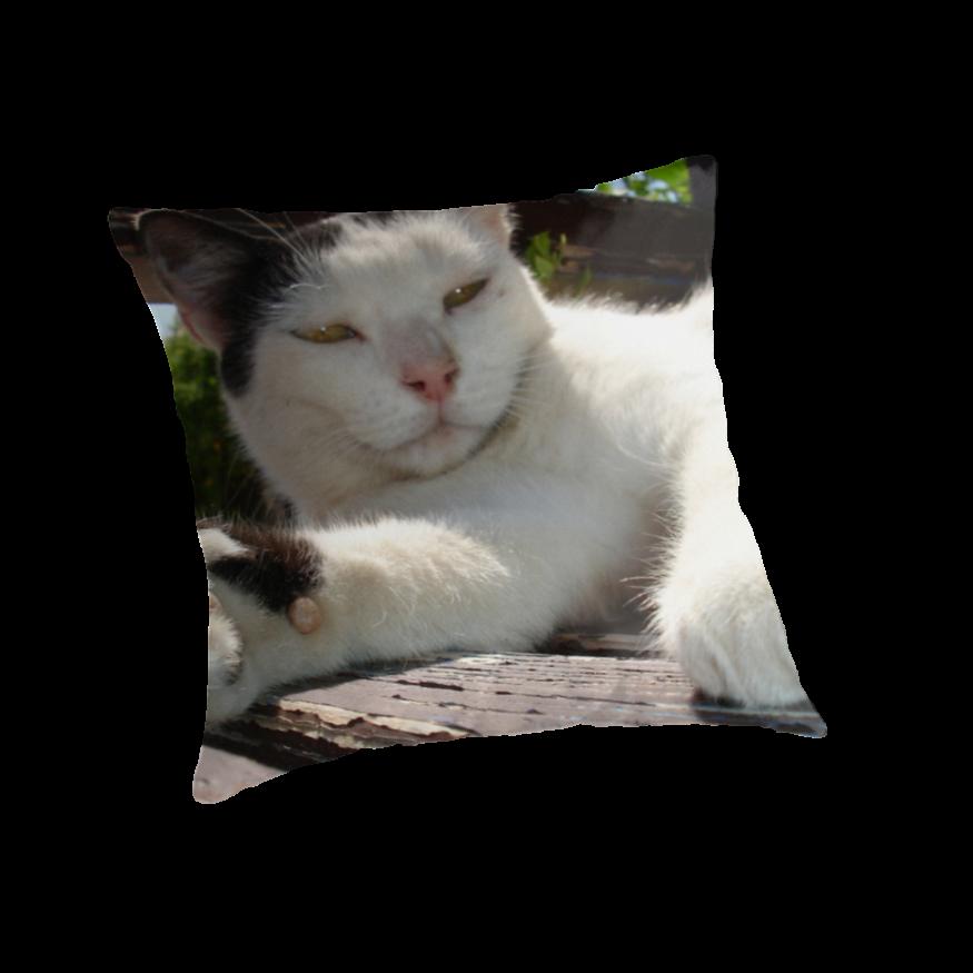 Oriental Bicolor Cat: Oriental Bicolorcatpictures Breed