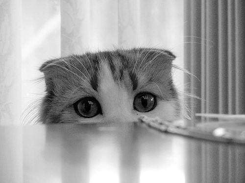 Raas Kitten: Raas Fotos De Gatinhos Fofospage Breed