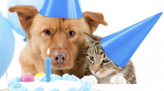 Raas Kitten: Raas Waarom Zijn Er Honden En Kattenjaren Breed